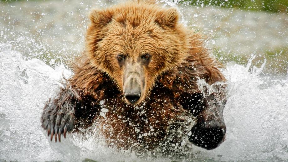 Wonderlijk Bruine beer : Identiteitskaart | Rangerclub PP-08
